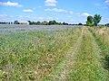 Kindelwald - Feldweg (Field Path) - geo.hlipp.de - 39568.jpg