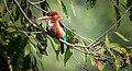 Kingfisher... (29742549228).jpg