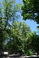 Kirovograd Kovalivs'kiy Park 02 (YDS 4779).JPG