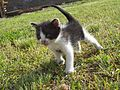 Kitten (07) by Ron.jpg