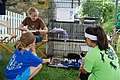 Kittens for adoption at Dog Days 2013 (9358355661) (2).jpg