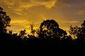 Klias Wetlands at dusk 01.jpg