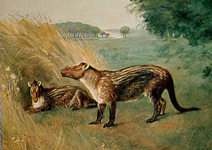 Phenacodus - Restoration by Charles R. Knight