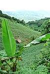 Kon Tum Province landscape (5686574286).jpg