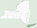 Kosteletzkya virginica NY-dist-map.png