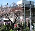Kototoi Dango Shop 20090402 2.jpg