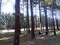 Krzyż w miejscu śmierci ks. Michała Rapacza - panoramio.jpg
