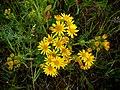 Kwiat - panoramio (5).jpg