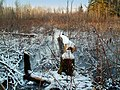 L`étang des castors - panoramio.jpg