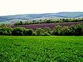 L409, Moldova - panoramio (4).jpg