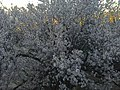 L arbre.jpg