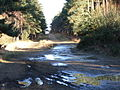 Lake Ride, Swinley Forest - geograph.org.uk - 115304.jpg