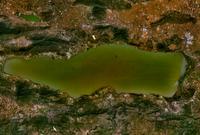 Lake chapala.png
