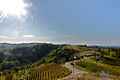 Langhe View of vineyards.jpg