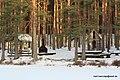 Lasva Parish, Võru County, Estonia - panoramio - Mart Keerutaja (13).jpg