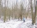 Laubwald beim Teltowkanal (Deciduous Wood by the Teltow Canal) - geo.hlipp.de - 32141.jpg