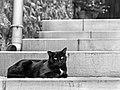 Le chat noir est couché (30057147014).jpg