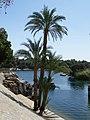 Le jardin botanique d'Aswan - panoramio - youssef alam (2).jpg