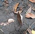 Leafy butterfly.jpg