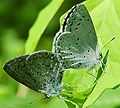 Lepidoptera 005.jpg