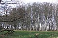Lews Castle grounds, early spring - geograph.org.uk - 600526.jpg
