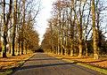 Limetree Avenue Clumber Park - geograph.org.uk - 607830.jpg