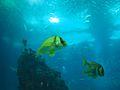 Lisbon Oceanarium (14380355216).jpg