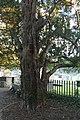 Llandygi - Eglwys Sant Tegai - St Tegai's Church, Llandygai, Gwynedd, Wales 10.jpg