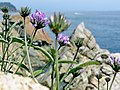 Lloret de Mar - panoramio (33).jpg