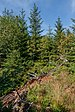 Lothar Path - Black Forest National Park 07.jpg