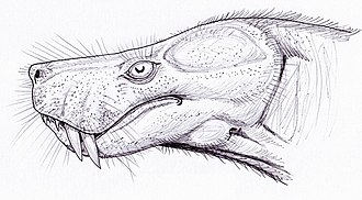 Therocephalia - Lycosuchus head reconstruction