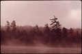 MISTY MORNING ON TWITCHELL LAKE SHOWING VIRGIN WHITE PINES IN THE ADIRONDACK FOREST PRESERVE - NARA - 554754.tif