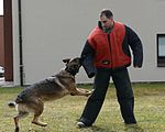 MWD bites into demonstration 150327-F-ZC075-071.jpg
