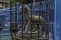 Machhindra Bahal Lalitpur-IMG 4787.jpg