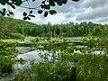 Madden Wetlands in Sunny Brook State Park.jpg