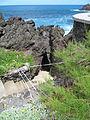 Madeira em Abril de 2011 IMG 1518 (5661282553).jpg
