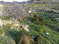 Mahis Ain Abu Jurban.jpg