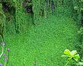 Makahiku Falls green wall.jpg