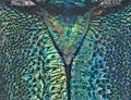 Malayanochroma cheongae Bentanachs & Drouin, 2013 Male Scutellum (28361058300).png