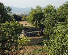 Selva Mallorca Hotel