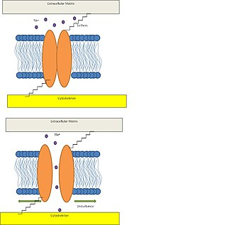 Mechanosensitive channels - Image: Mammalian Hair Cell Model
