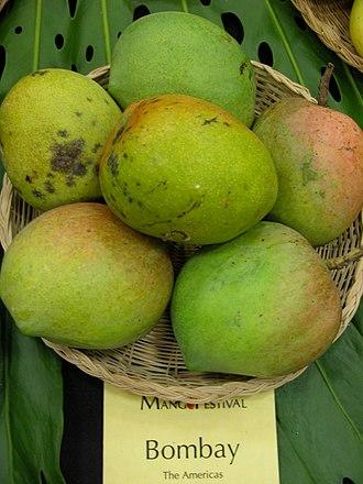 Bombay (mango) - Bombay mango at the 15th Annual International Mango Festival at the Fairchild Tropical Botanic Garden in Coral Gables, Florida