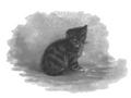Maria Konopnicka - Szczęśliwy światek (1895) page 28a.png