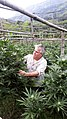 Marijuana in Colombia Empresario.jpg