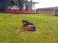 Marinilla Colombia - Street Dogs (16).jpg
