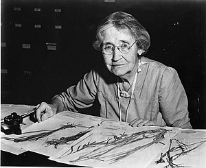 Mary Agnes Chase (1869-1963), sitting at desk with specimens.jpg