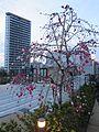 Meguro Sky Garden, Plum Tree.jpg
