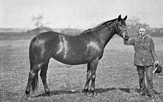 Memoir (horse) British-bred Thoroughbred racehorse