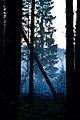 Metsä Nousiaisissa.jpg