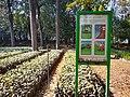 Mexico City- Viveros de Coyoacan- Tree nursery sign.jpg